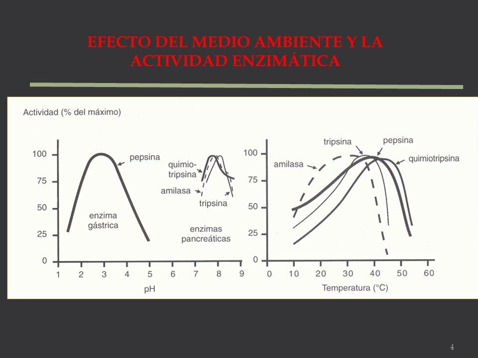 EFECTO DEL MEDIO AMBIENTE Y LA ACTIVIDAD ENZIMÁTICA 4