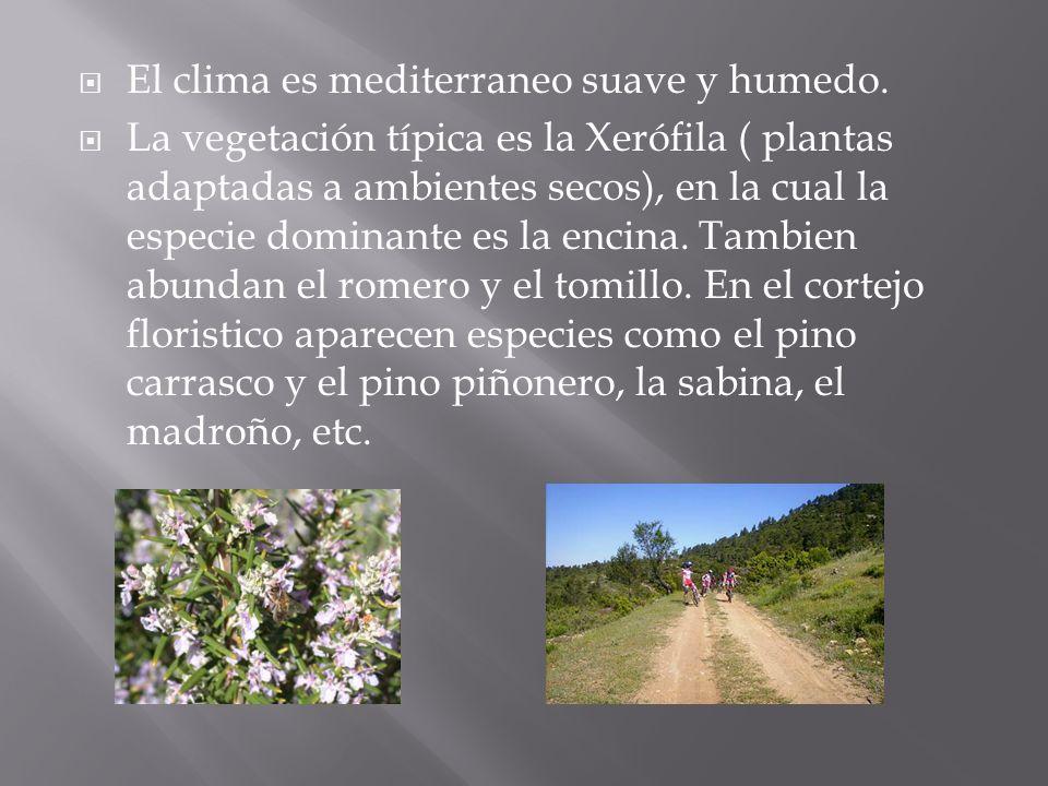 El clima es mediterraneo suave y humedo. La vegetación típica es la Xerófila ( plantas adaptadas a ambientes secos), en la cual la especie dominante e