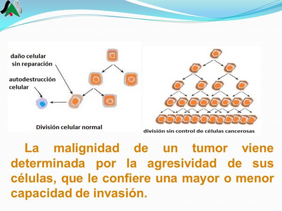 La malignidad de un tumor viene determinada por la agresividad de sus células, que le confiere una mayor o menor capacidad de invasión.