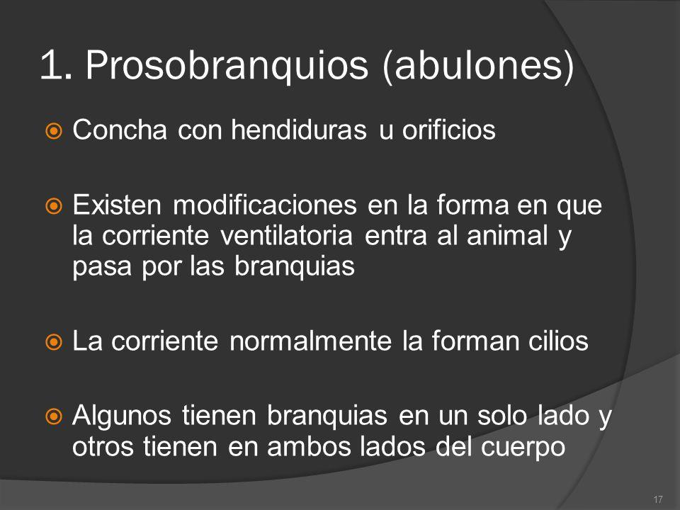1. Prosobranquios (abulones) Concha con hendiduras u orificios Existen modificaciones en la forma en que la corriente ventilatoria entra al animal y p