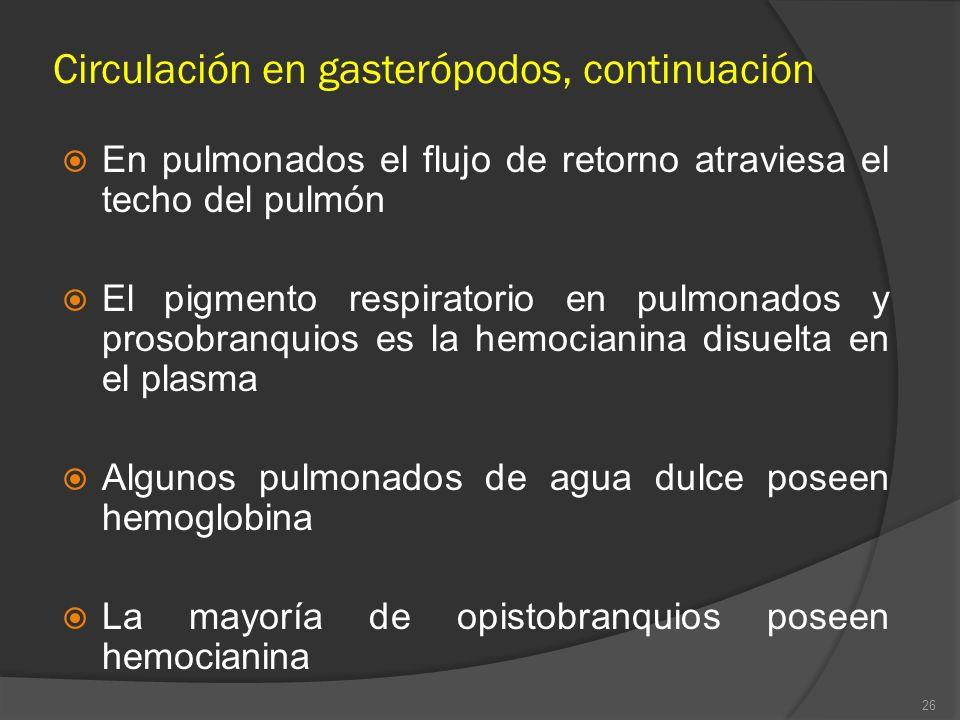 En pulmonados el flujo de retorno atraviesa el techo del pulmón El pigmento respiratorio en pulmonados y prosobranquios es la hemocianina disuelta en