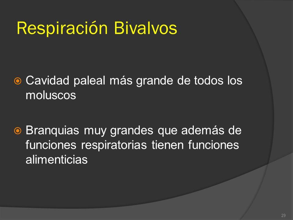 Respiración Bivalvos Cavidad paleal más grande de todos los moluscos Branquias muy grandes que además de funciones respiratorias tienen funciones alim