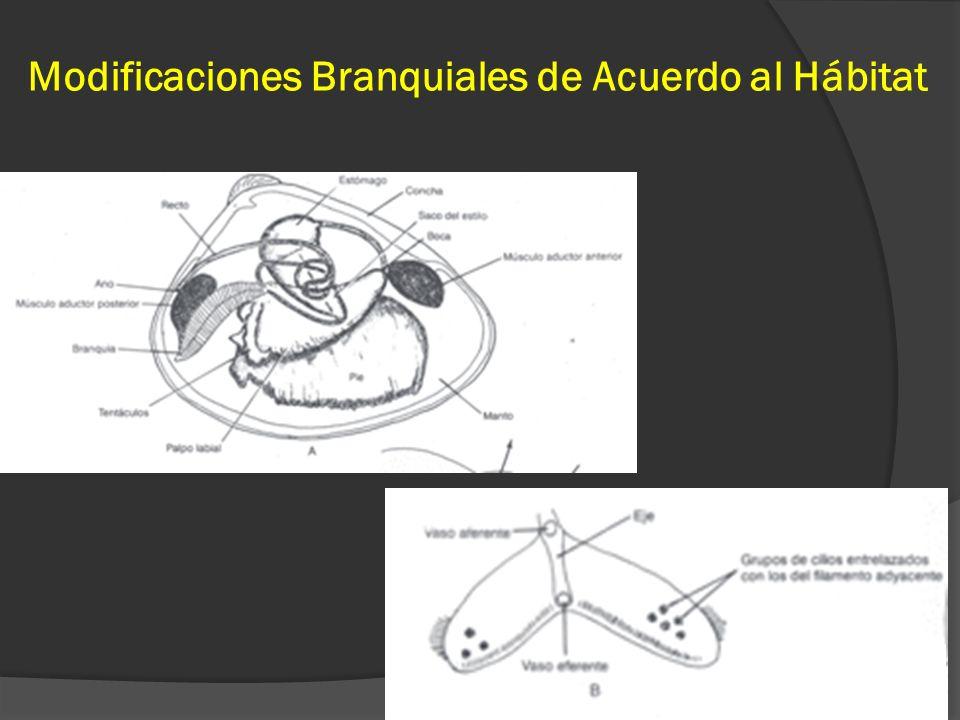Modificaciones Branquiales de Acuerdo al Hábitat 34