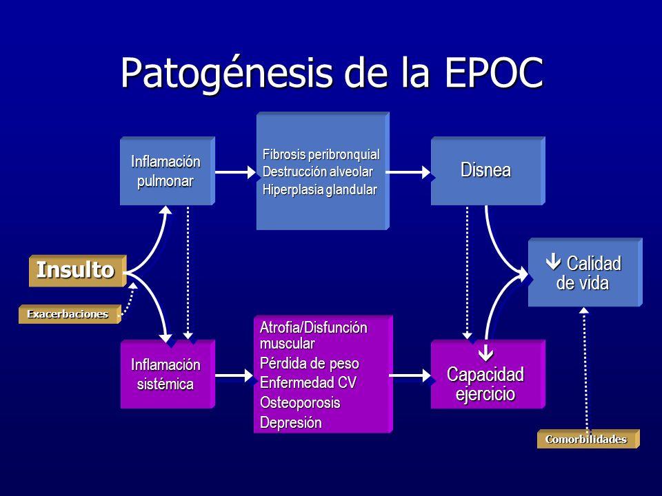 Insulto Patogénesis de la EPOC Fibrosis peribronquial Destrucción alveolar Hiperplasia glandular Atrofia/Disfunción muscular Pérdida de peso Enfermeda