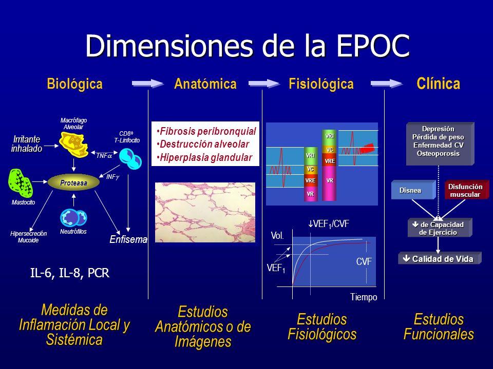 Dimensiones de la EPOC Medidas de Inflamación Local y Sistémica Estudios Anatómicos o de Imágenes Estudios Fisiológicos Estudios Funcionales Biológica