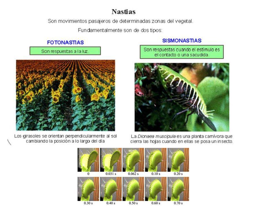 http://plantilandia- jacky.blogspot.com.es/2012/03/nutricion-en- las-plantas-la-nutricion.html http://ars.els-cdn.com/content/image/1-s2.0- S1567539408000376-gr8.jpg