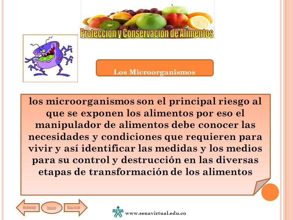los microorganismos son el principal riesgo al que se exponen los alimentos por eso el manipulador de alimentos debe conocer las necesidades y condici