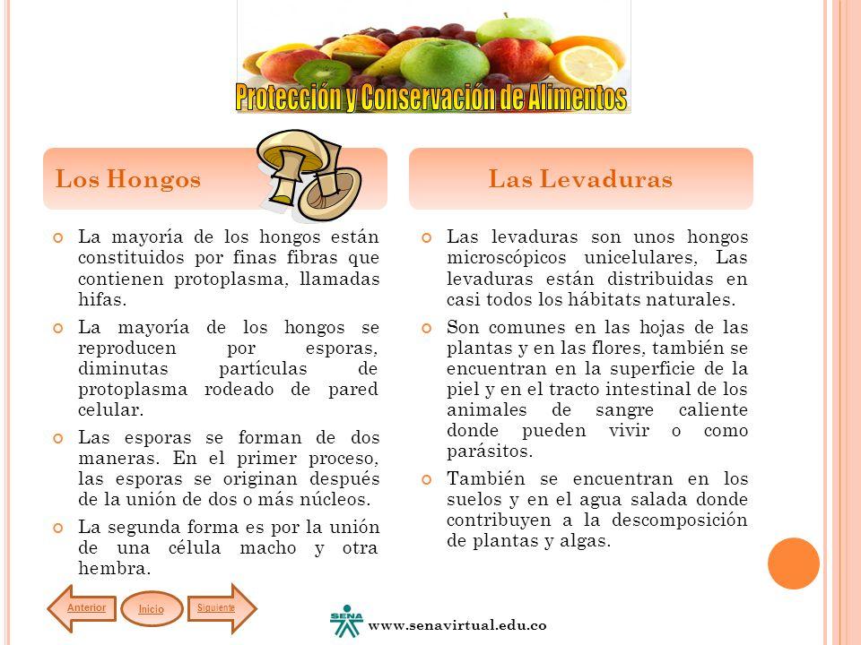 Es la fuente de energía necesaria para la vida de los microorganismos.