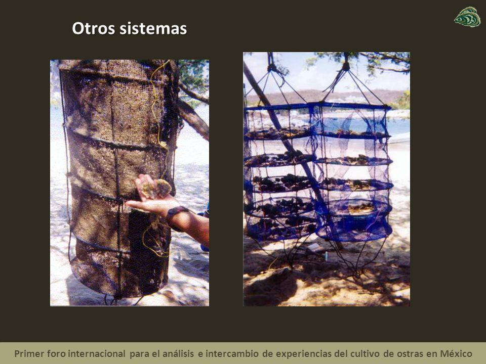 Primer foro internacional para el análisis e intercambio de experiencias del cultivo de ostras en México Otros sistemas