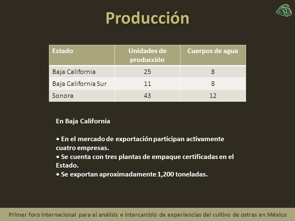 Primer foro internacional para el análisis e intercambio de experiencias del cultivo de ostras en México Producción EstadoUnidades de producción Cuerpos de agua Baja California258 Baja California Sur118 Sonora4312 En Baja California En el mercado de exportación participan activamente cuatro empresas.
