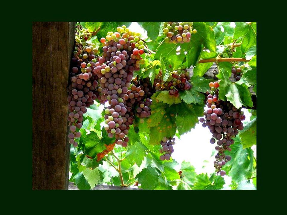Un buen vino no necesita rótulo. Proverbio francés