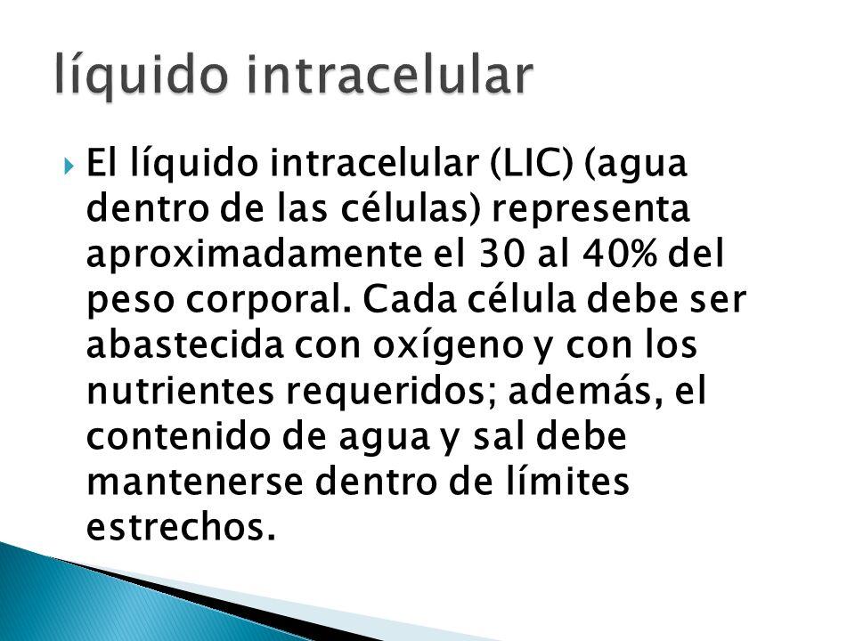 El líquido intracelular (LIC) (agua dentro de las células) representa aproximadamente el 30 al 40% del peso corporal. Cada célula debe ser abastecida