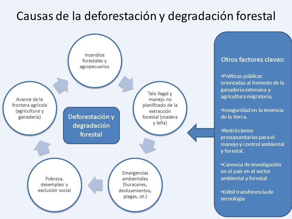 Causas de la deforestación y degradación forestal Incendios forestales y agropecuarios Tala ilegal y manejo no planificado de la extracción forestal (