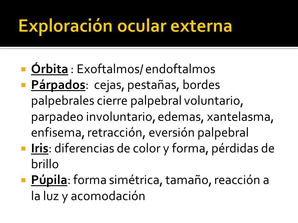 Órbita : Exoftalmos/ endoftalmos Párpados: cejas, pestañas, bordes palpebrales cierre palpebral voluntario, parpadeo involuntario, edemas, xantelasma,