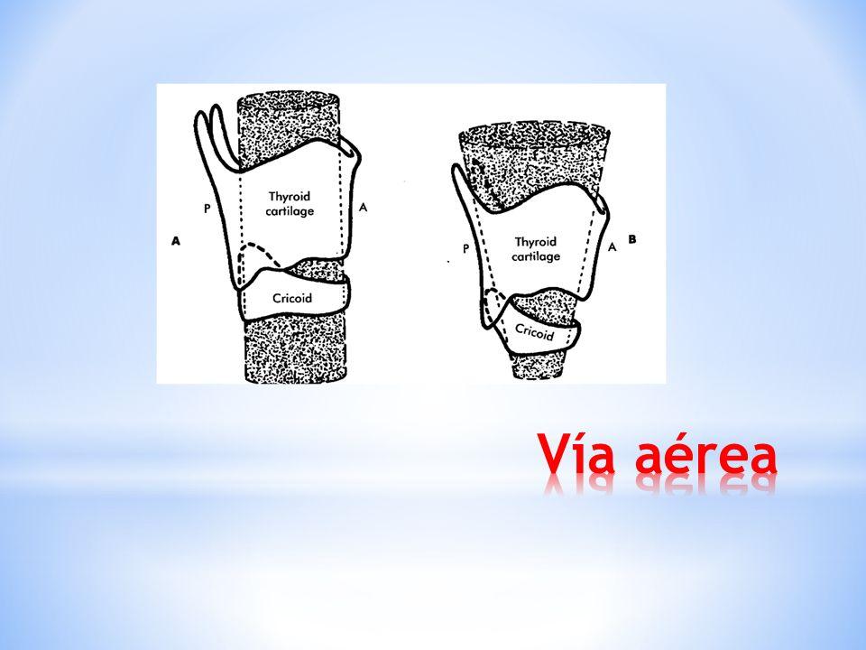 * Laringe: nivel cervical * Neonatos: C2 * Niños: C3-C4 * Adultos: C5-C6 * Nivel cervical + lengua grande + mandíbula pequeña: obstrucción de vía aére