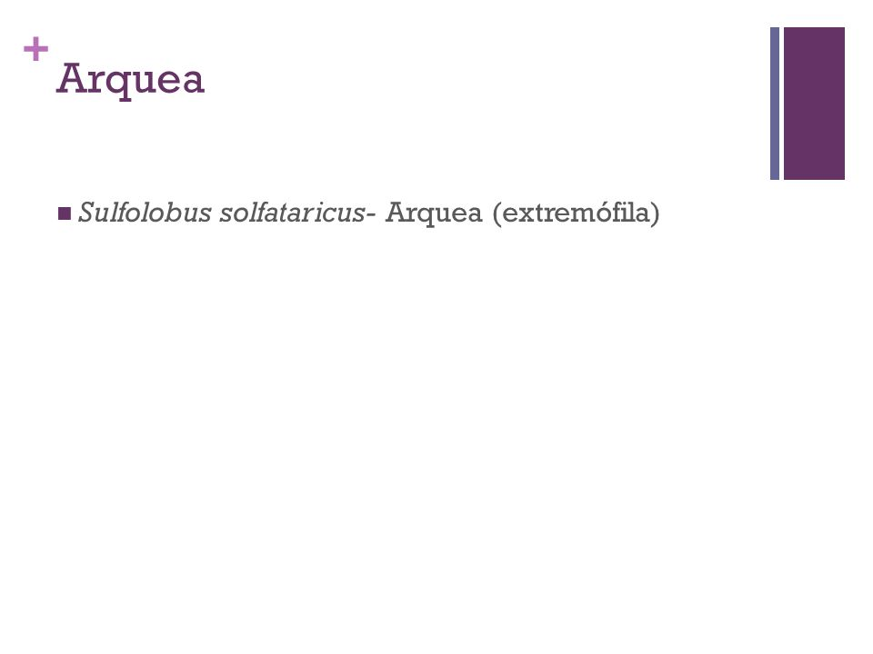 + Arquea Sulfolobus solfataricus- Arquea (extremófila)
