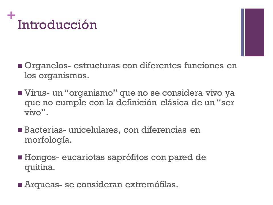 + Introducción Organelos- estructuras con diferentes funciones en los organismos. Virus- un organismo que no se considera vivo ya que no cumple con la