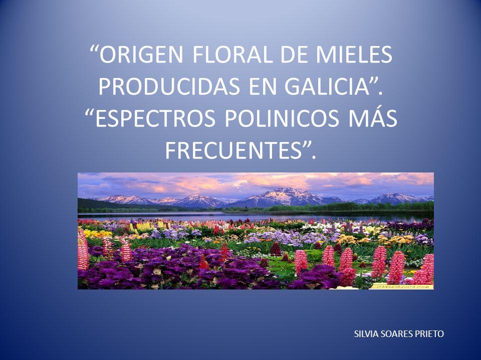 ORIGEN FLORAL DE MIELES PRODUCIDAS EN GALICIA. ESPECTROS POLINICOS MÁS FRECUENTES. SILVIA SOARES PRIETO
