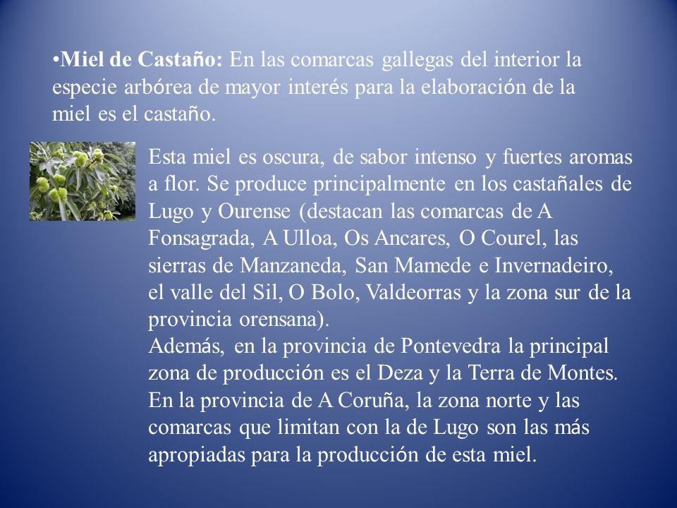 Miel de Casta ñ o: En las comarcas gallegas del interior la especie arb ó rea de mayor inter é s para la elaboraci ó n de la miel es el casta ñ o. Est