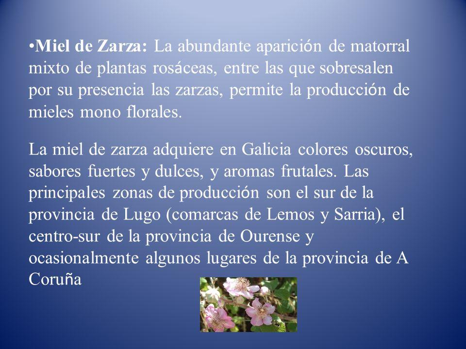 Miel de Zarza: La abundante aparici ó n de matorral mixto de plantas ros á ceas, entre las que sobresalen por su presencia las zarzas, permite la prod