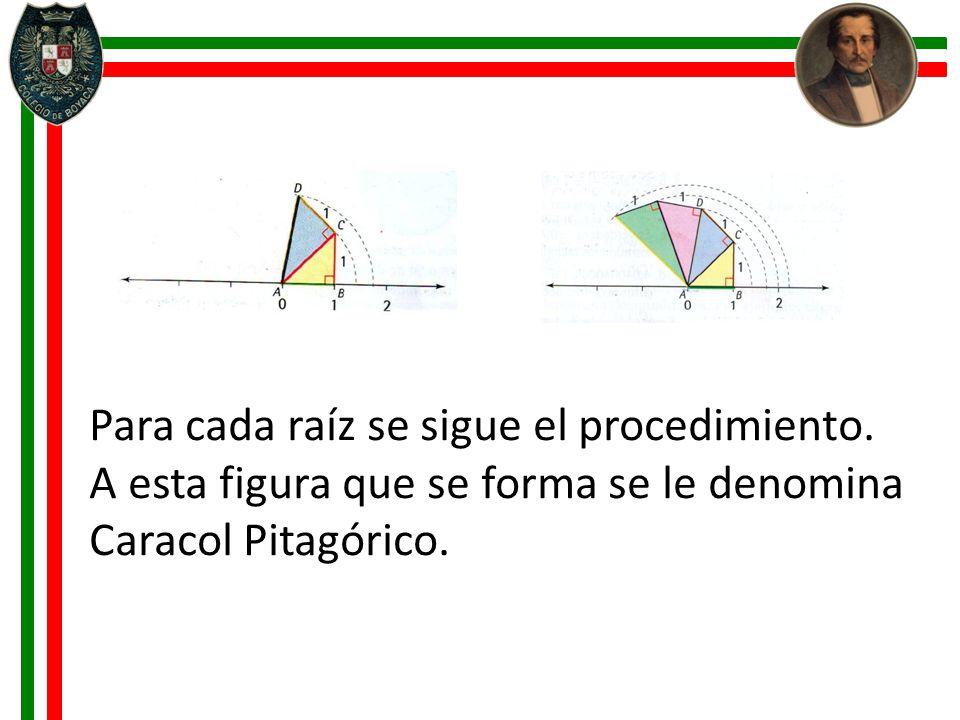 Para cada raíz se sigue el procedimiento. A esta figura que se forma se le denomina Caracol Pitagórico.