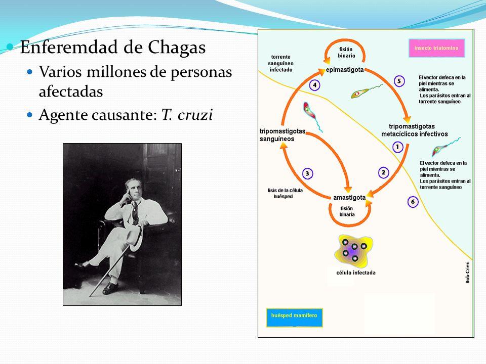 Enferemdad de Chagas Varios millones de personas afectadas Agente causante: T. cruzi