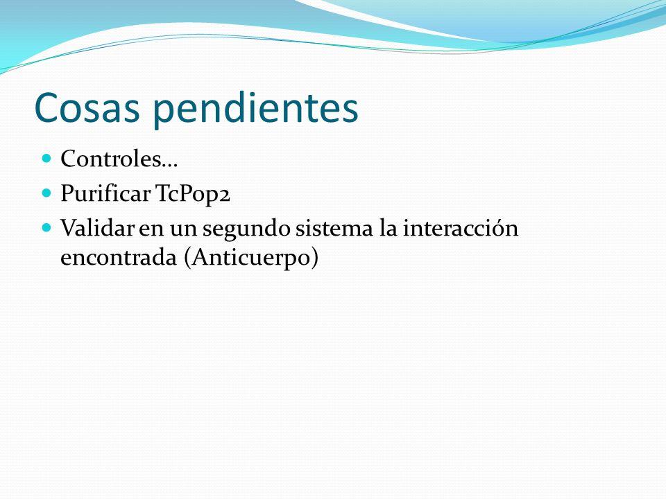 Cosas pendientes Controles… Purificar TcPop2 Validar en un segundo sistema la interacción encontrada (Anticuerpo)