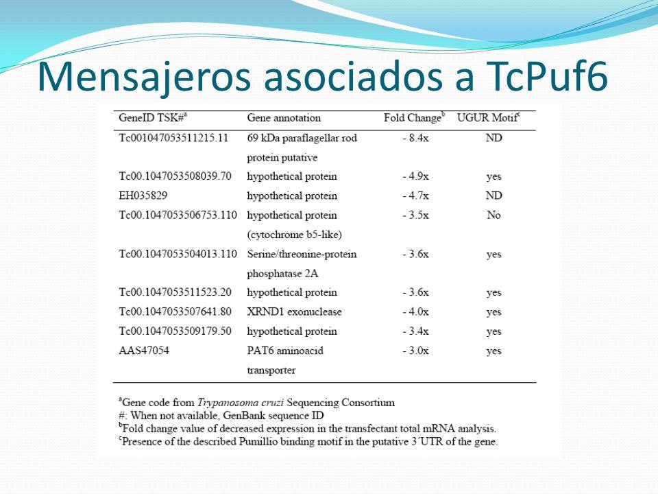 Mensajeros asociados a TcPuf6