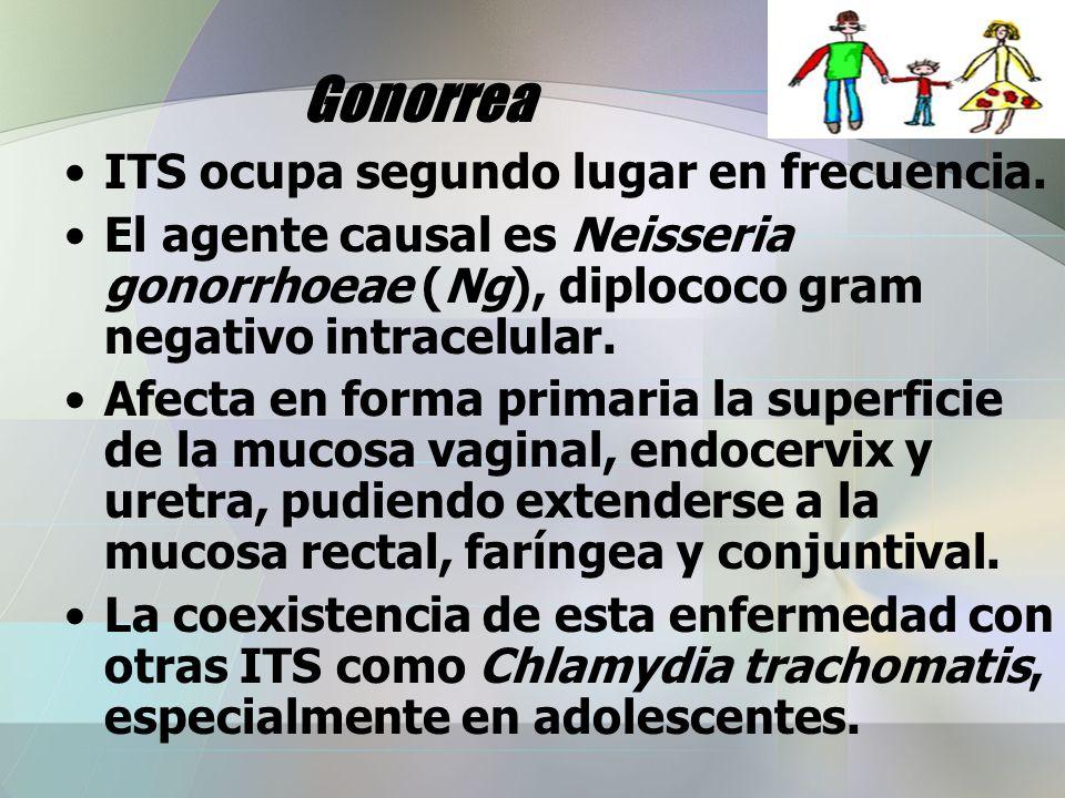 Gonorrea ITS ocupa segundo lugar en frecuencia. El agente causal es Neisseria gonorrhoeae (Ng), diplococo gram negativo intracelular. Afecta en forma