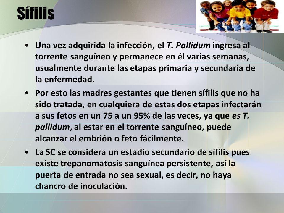 Sífilis Una vez adquirida la infección, el T. Pallidum ingresa al torrente sanguíneo y permanece en él varias semanas, usualmente durante las etapas p