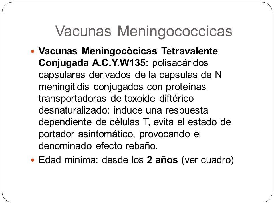 Vacunas Meningococcicas Vacunas Meningocòcicas Tetravalente Conjugada A.C.Y.W135: polisacáridos capsulares derivados de la capsulas de N meningitidis