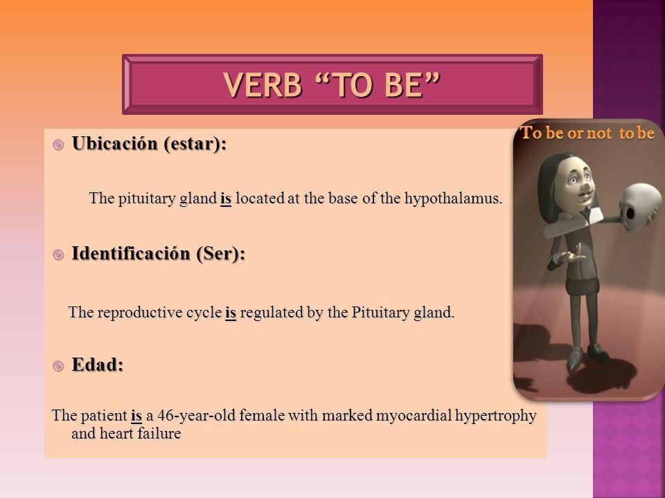 Ubicación (estar): Ubicación (estar): The pituitary gland is located at the base of the hypothalamus. Identificación (Ser): Identificación (Ser): The