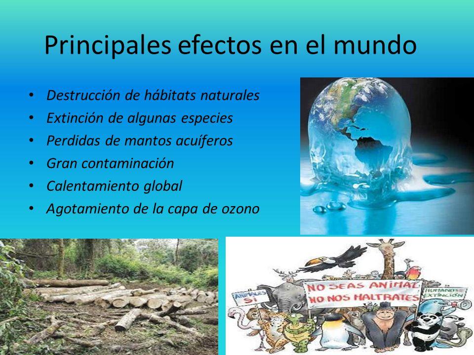 Principales efectos en el mundo Destrucción de hábitats naturales Extinción de algunas especies Perdidas de mantos acuíferos Gran contaminación Calent