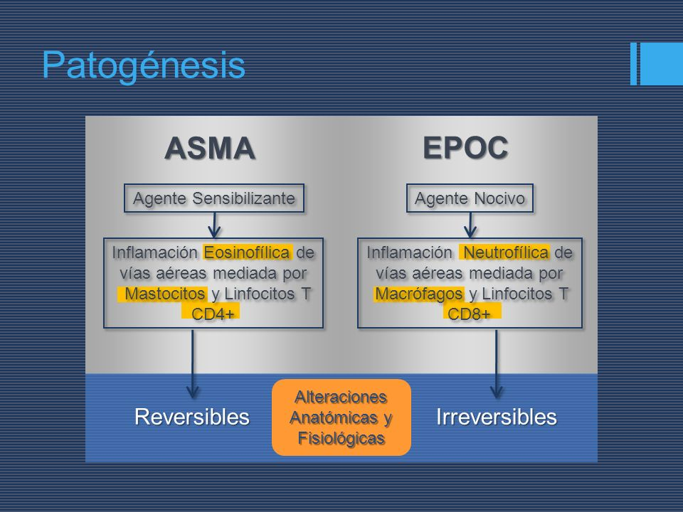 Patogénesis ASMA EPOC Agente Sensibilizante Inflamación Eosinofílica de vías aéreas mediada por Mastocitos y Linfocitos T CD4+ Inflamación Eosinofílic
