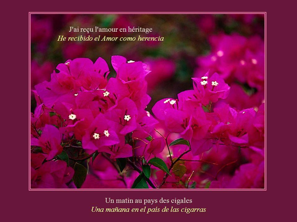 J ai reçu l amour en héritage He recibido el Amor como herencia Un matin au pays des cigales Una mañana en el país de las cigarras