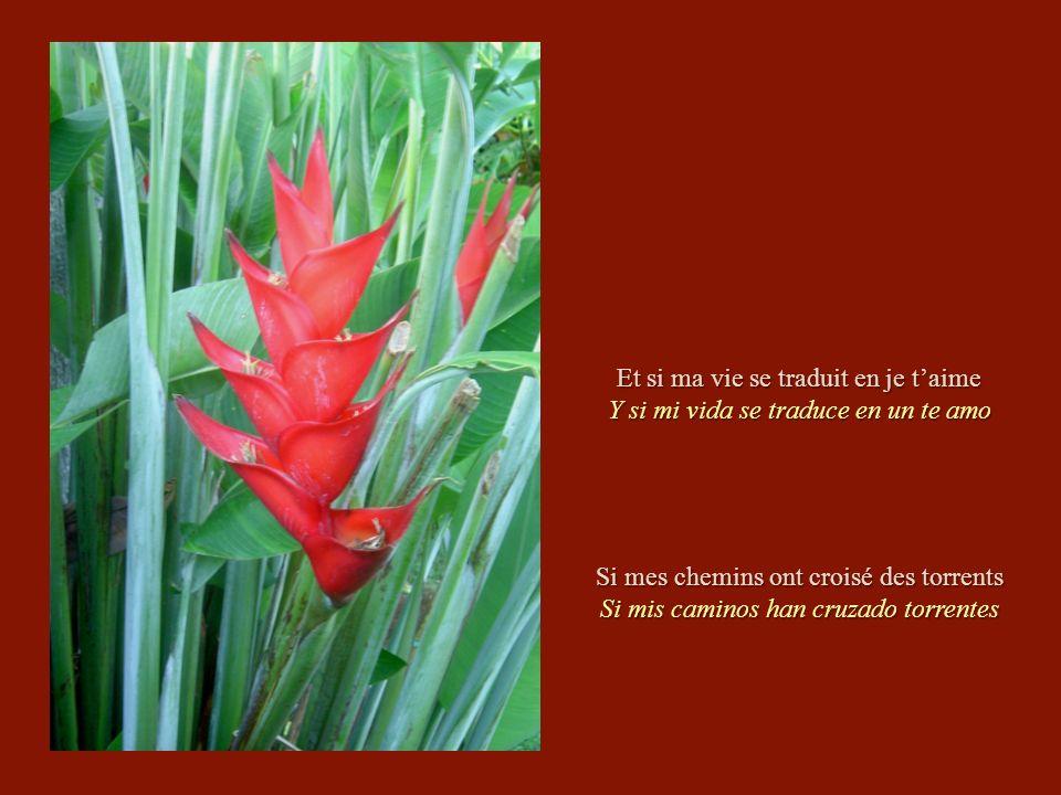 Cest un beau cadeau Es un bello regalo LAmour en héritage El amor en herencia