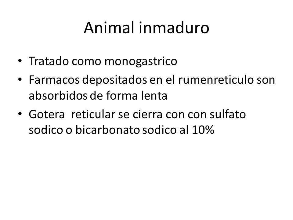 Animal inmaduro Tratado como monogastrico Farmacos depositados en el rumenreticulo son absorbidos de forma lenta Gotera reticular se cierra con con su