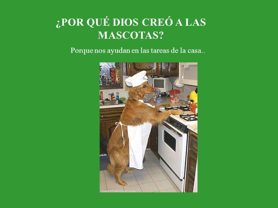 ¿POR QUÉ DIOS CREÓ A LAS MASCOTAS Porque nos ayudan en las tareas de la casa..
