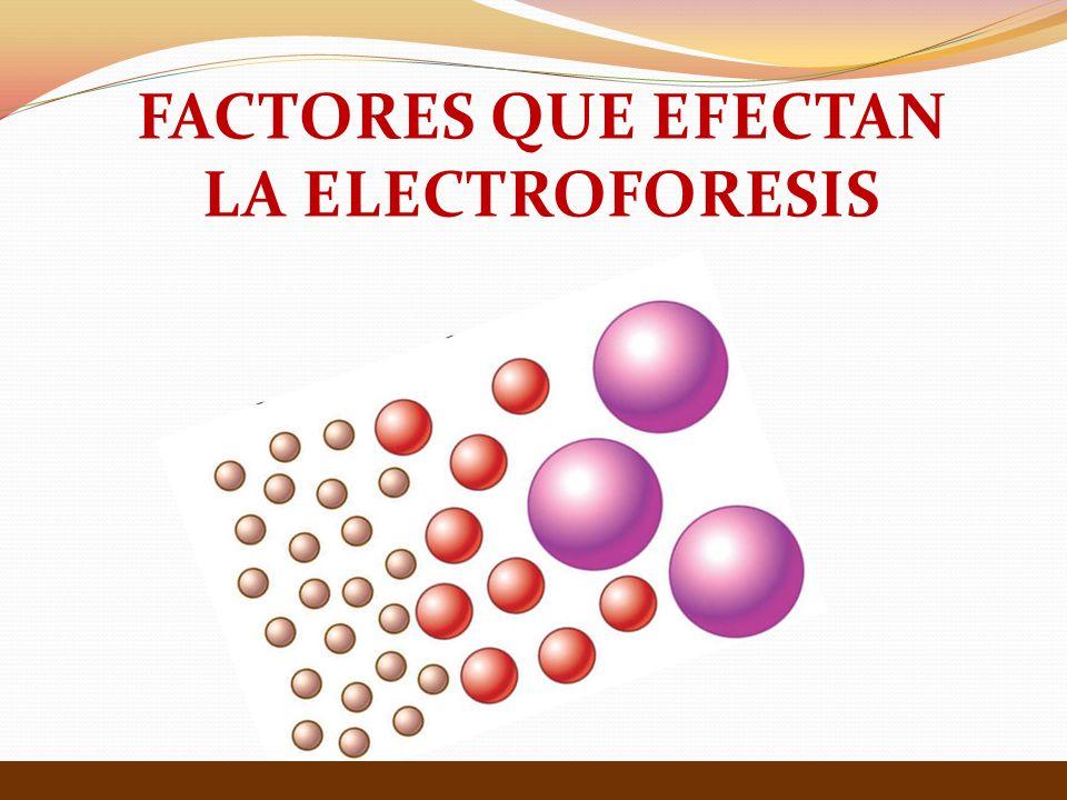 FACTORES QUE EFECTAN LA ELECTROFORESIS