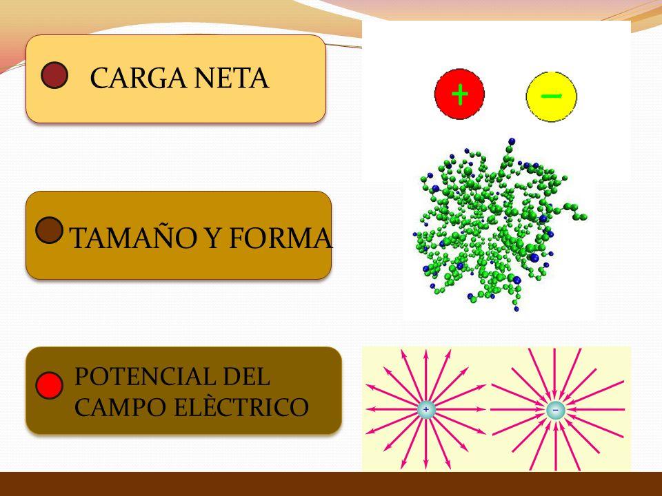 CARGA NETA TAMAÑO Y FORMA POTENCIAL DEL CAMPO ELÈCTRICO