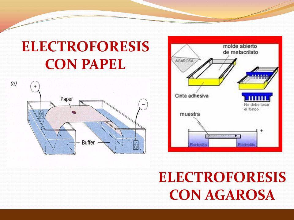 ELECTROFORESIS CON PAPEL ELECTROFORESIS CON AGAROSA