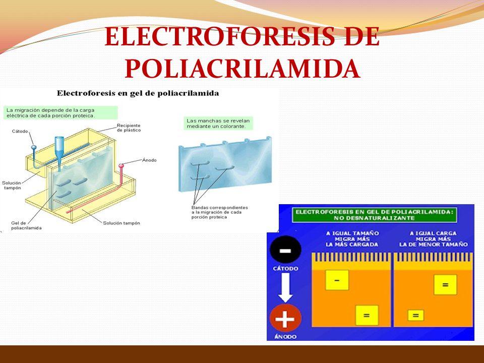 ELECTROFORESIS DE POLIACRILAMIDA