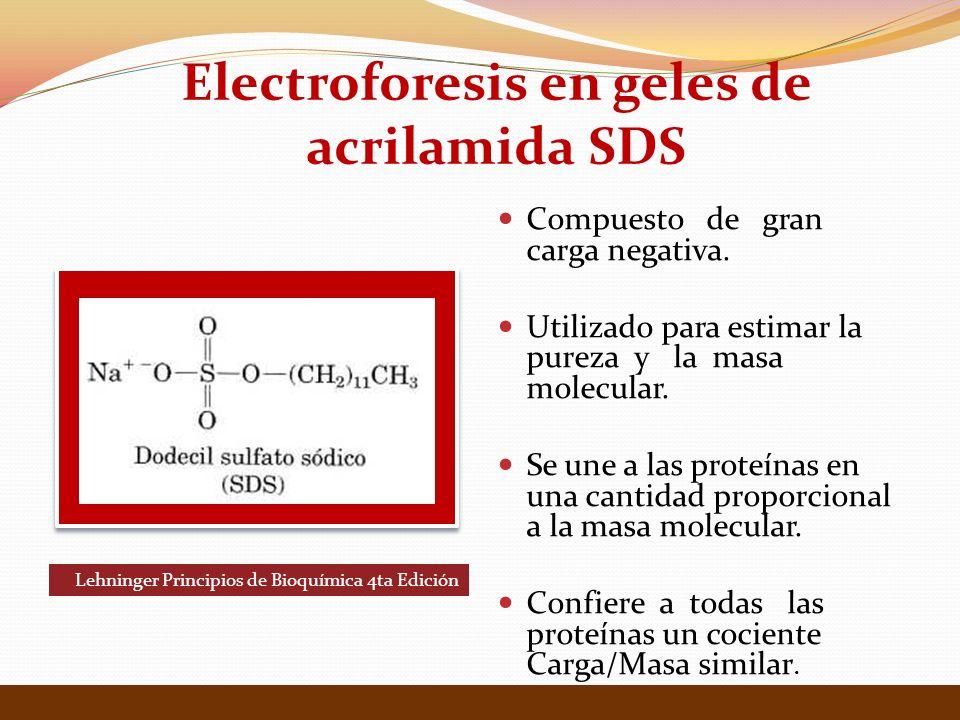 Electroforesis en geles de acrilamida SDS Compuesto de gran carga negativa. Utilizado para estimar la pureza y la masa molecular. Se une a las proteín