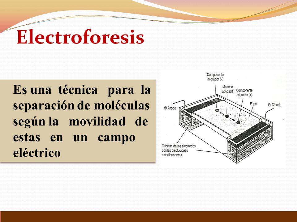Es una técnica para la separación de moléculas según la movilidad de estas en un campo eléctrico Es una técnica para la separación de moléculas según