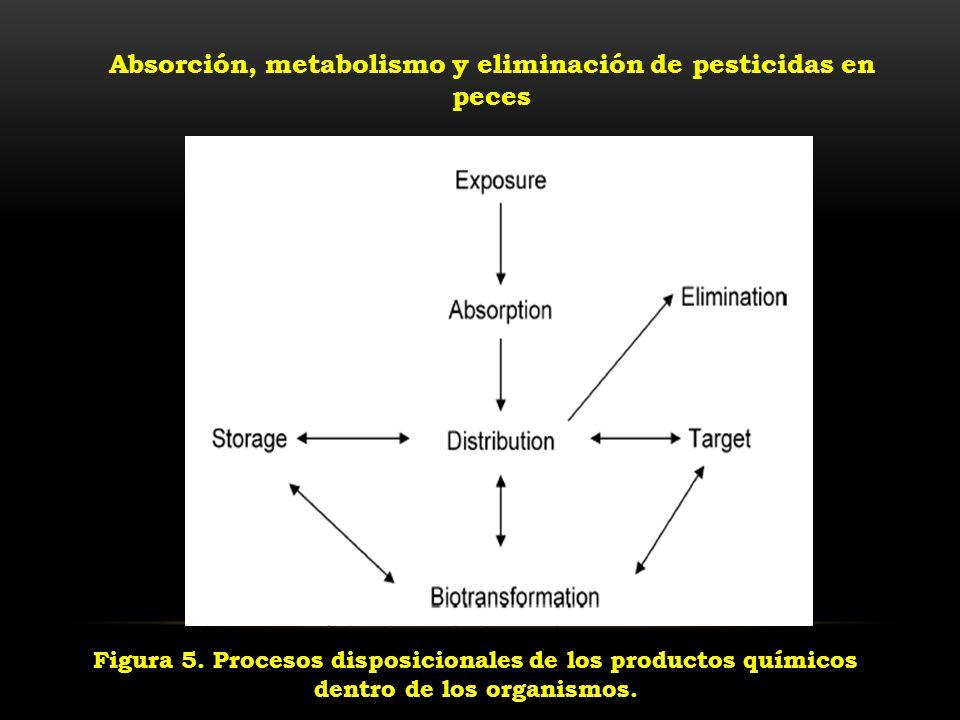 Figura 5. Procesos disposicionales de los productos químicos dentro de los organismos. Absorción, metabolismo y eliminación de pesticidas en peces