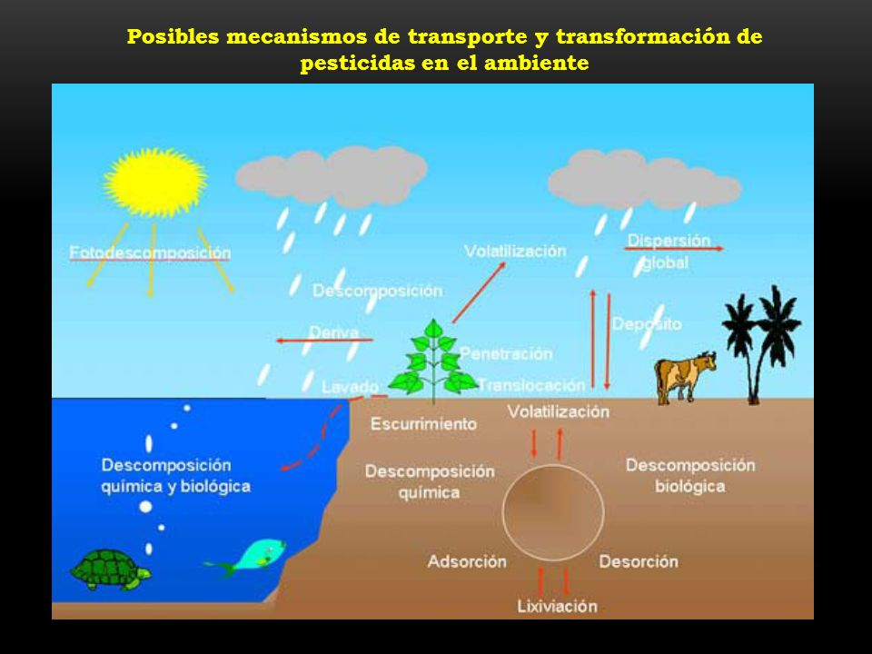 Posibles mecanismos de transporte y transformación de pesticidas en el ambiente