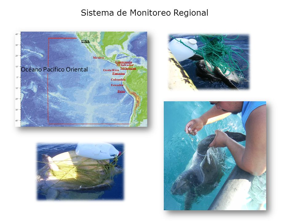 Sistema de Monitoreo Regional