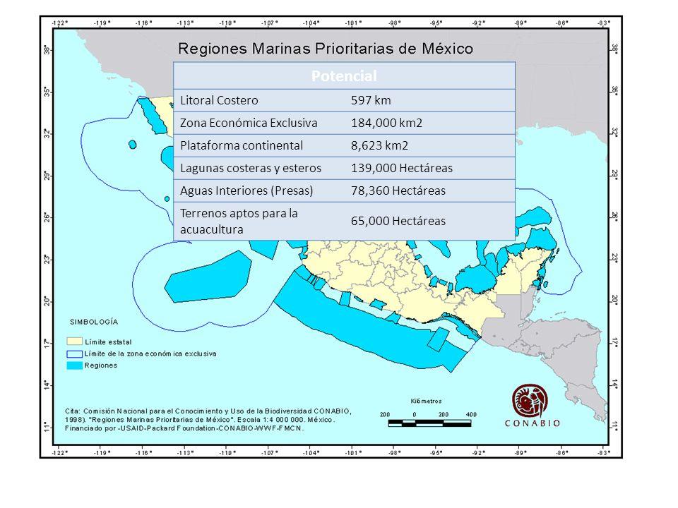 Potencial Litoral Costero597 km Zona Económica Exclusiva184,000 km2 Plataforma continental8,623 km2 Lagunas costeras y esteros139,000 Hectáreas Aguas Interiores (Presas)78,360 Hectáreas Terrenos aptos para la acuacultura 65,000 Hectáreas