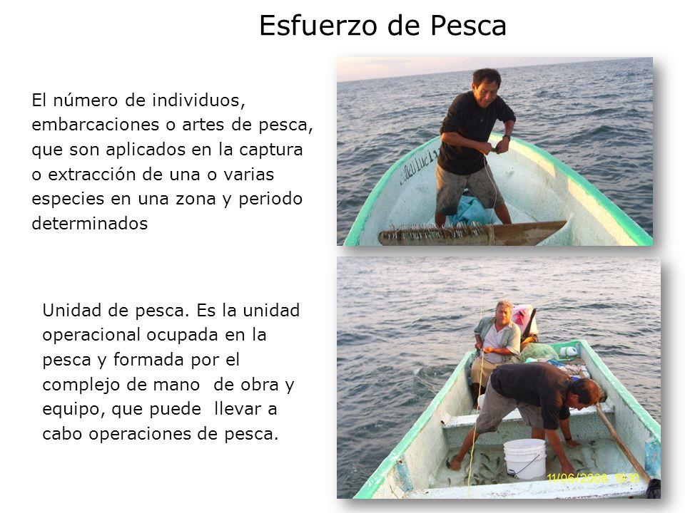 Esfuerzo de Pesca El número de individuos, embarcaciones o artes de pesca, que son aplicados en la captura o extracción de una o varias especies en una zona y periodo determinados Unidad de pesca.