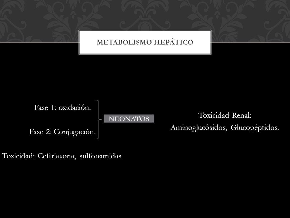 Fase 1: oxidación. Fase 2: Conjugación. Toxicidad: Ceftriaxona, sulfonamidas. Toxicidad Renal: Aminoglucósidos, Glucopéptidos. METABOLISMO HEPÁTICO NE